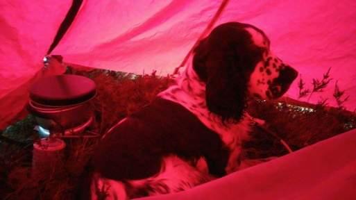 Zelda på telttur sommeren 2016